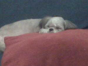 Herbie rests