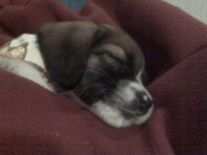 Rocco sleeps