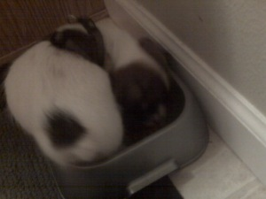 Rocco eating out of Herbie's huge bowl