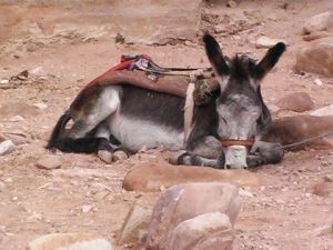 Sleepy Burro