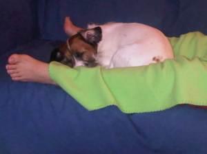 Rocco sleeping with my wife